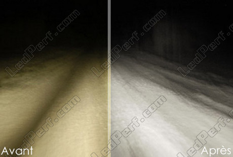 pack of 2 bulbs h16ll 19w cubit 5000k diamond white. Black Bedroom Furniture Sets. Home Design Ideas